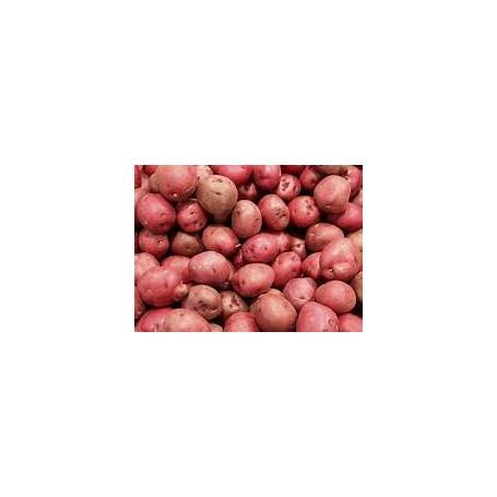 Patata nana rossa francese